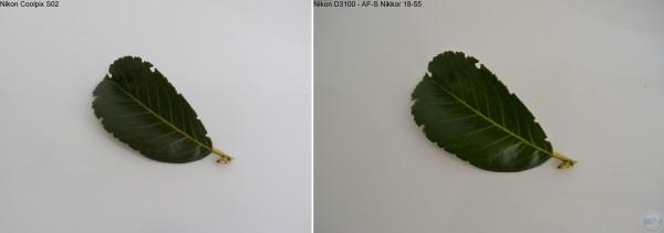 Aufnahme eines Blattes auf weißen Hintergrund ohne Zoom - linkes Bild Nikon S02 - rechtes Bild Nikon D3100