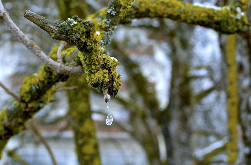 Eistropfen fällt vom Ast - Nikon Df - smartcamnews.eu