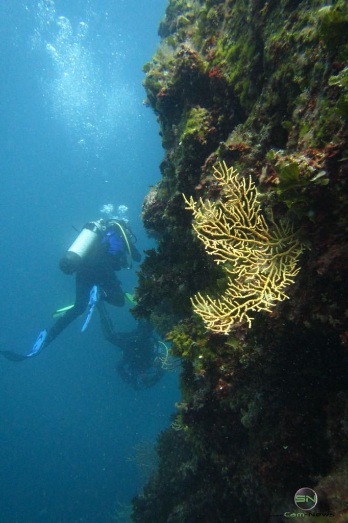 Steilwand Diving 22 Meter - Canon D30 - SmartCamNews