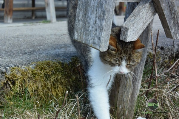 Die Katze - Nikon 1 V3 - SmartCamNews