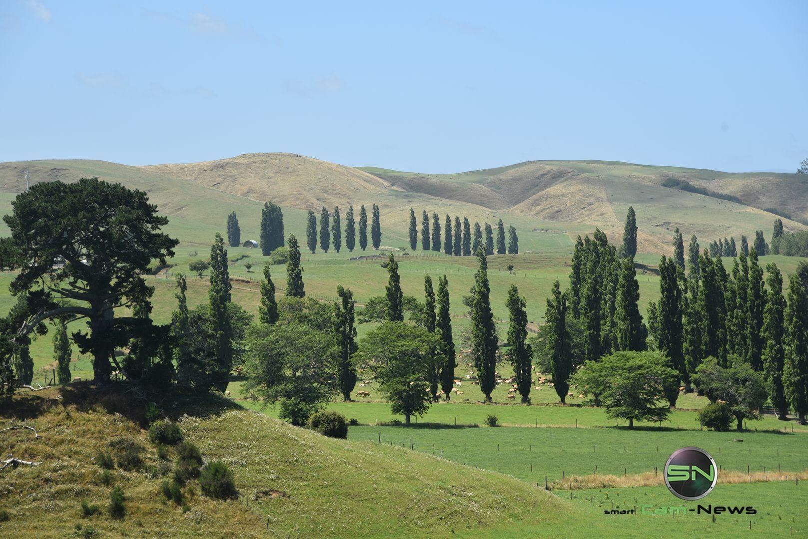 Auckland Neuseeland Landschaft - Nikon D750 - SmartCamNews