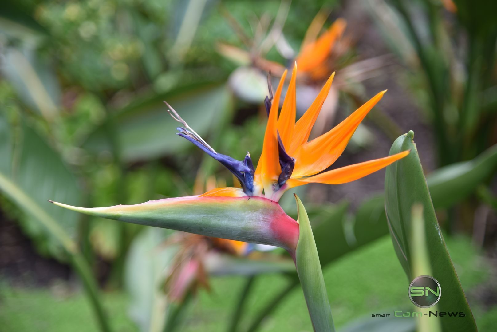 Blumen - Neuseeland - Nikon D750 - SmartCamNews