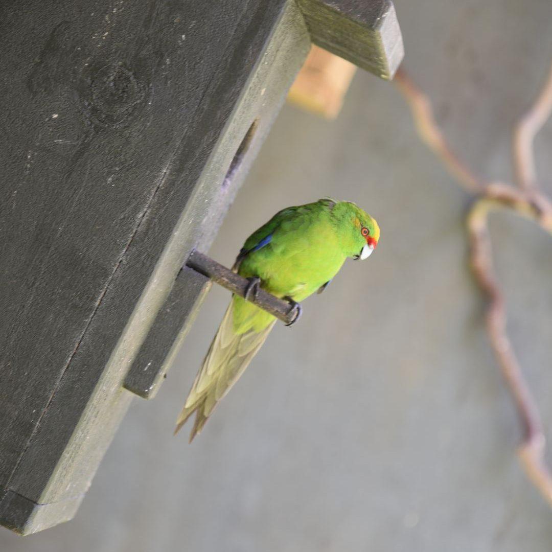 klein grün und kann fliegen - Neuseeland - Nikon D750 - SmartCamNews