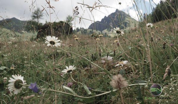 Blumenwiese Filter - Olympus PEN-F - SmartCamNews