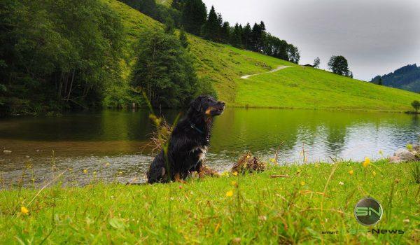 Hund in der Wiese - Olympus Pen-F SmartCamNews