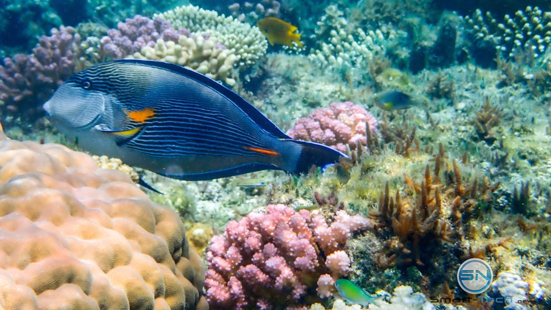 Blue Fish - Egypt - Diving - Olympus TG5