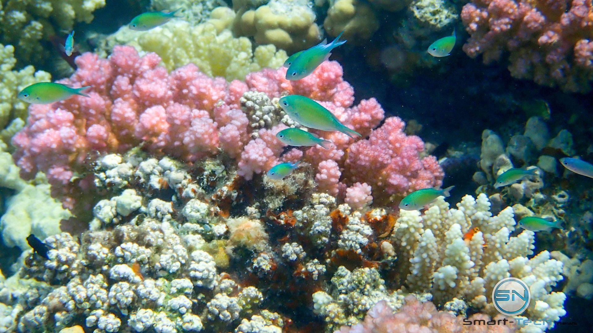Fische auf Koralle - Olympus TG5