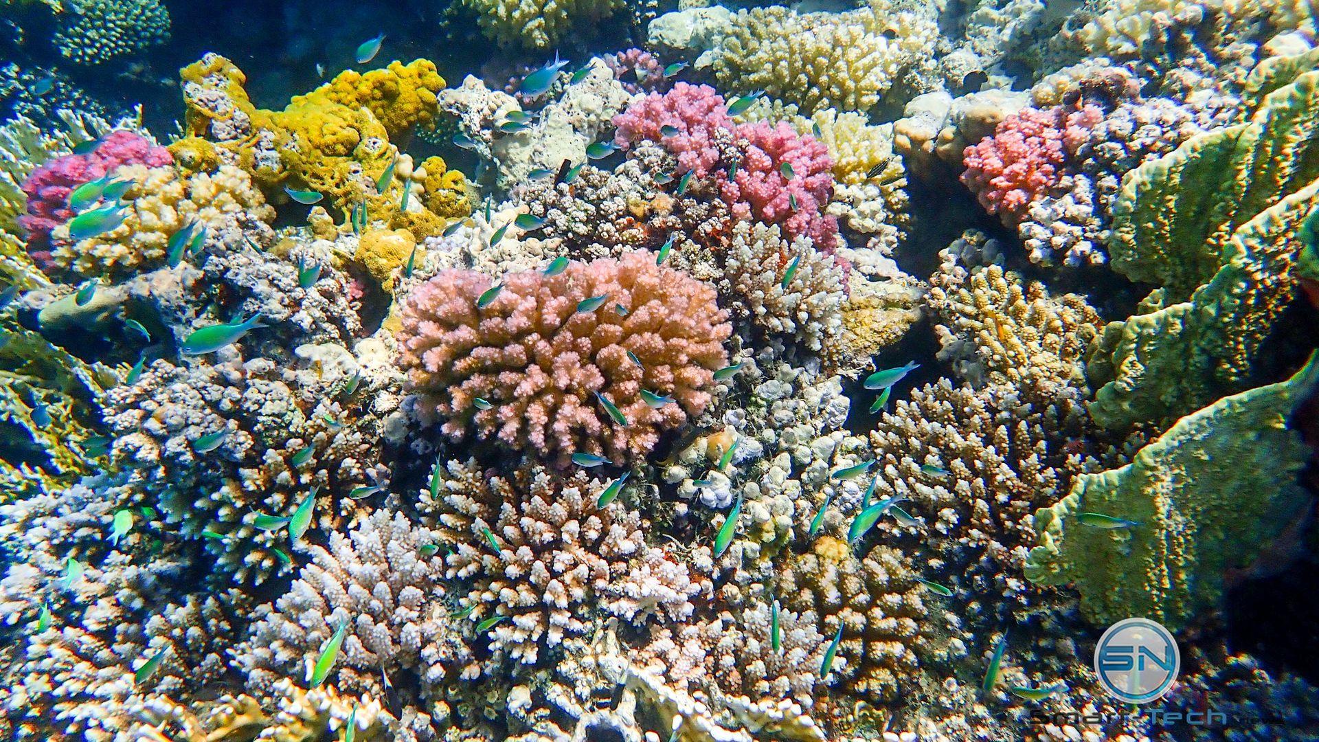 Korallengarten MarsaAlam Egypt - Olympu TG5