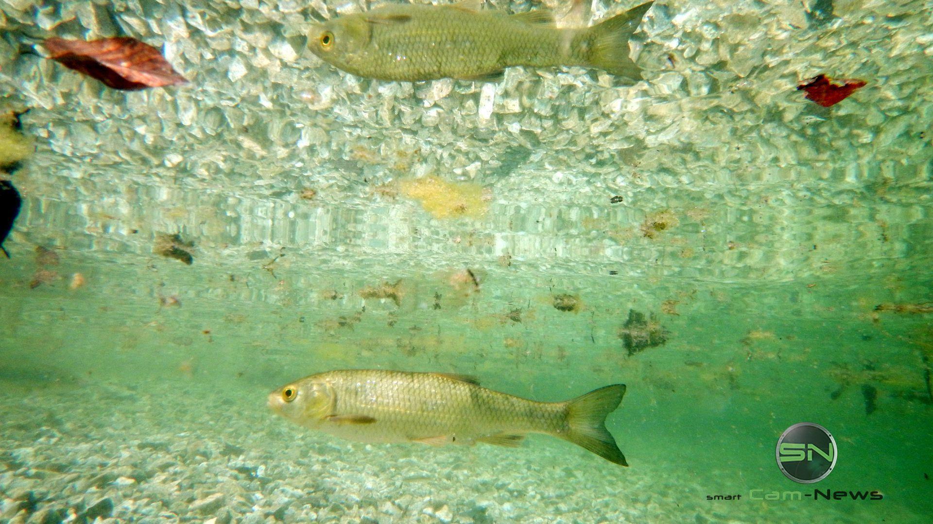 Fischspiegelung - Nikon AW130 - SmartCamNews