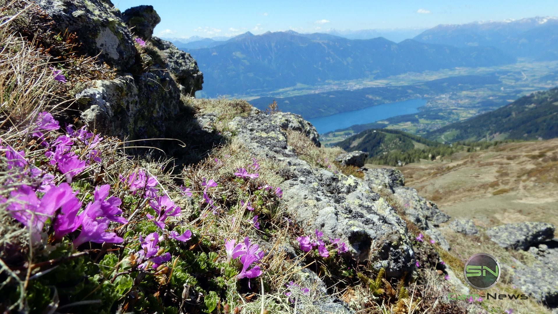 Alpenrosen - Nikon Coolpix A900 MegaZoom 35fach - Kärnten Millsättersee - SmartCamNews