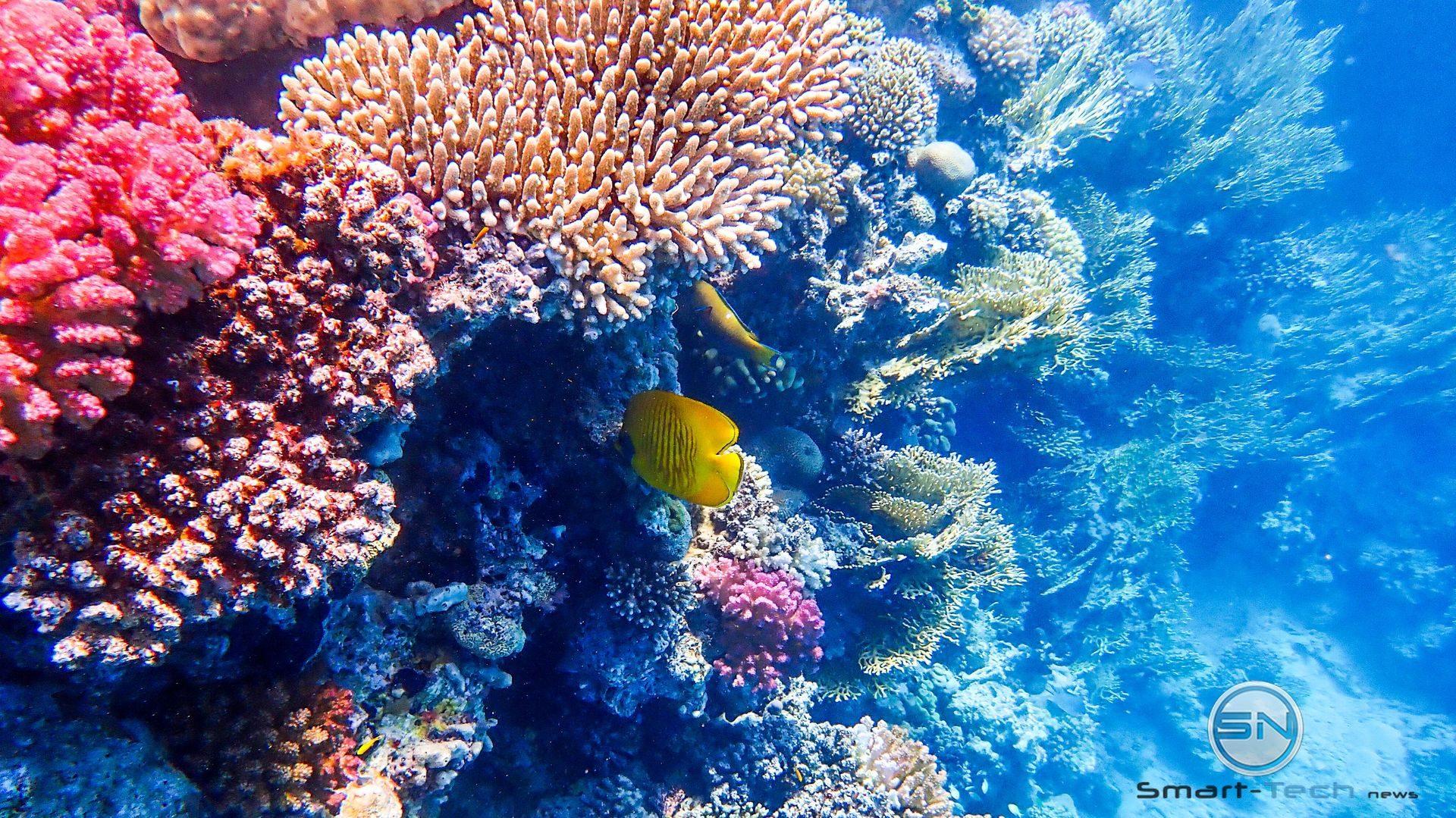 Korallengarten in Steilwand - Olympus TG5