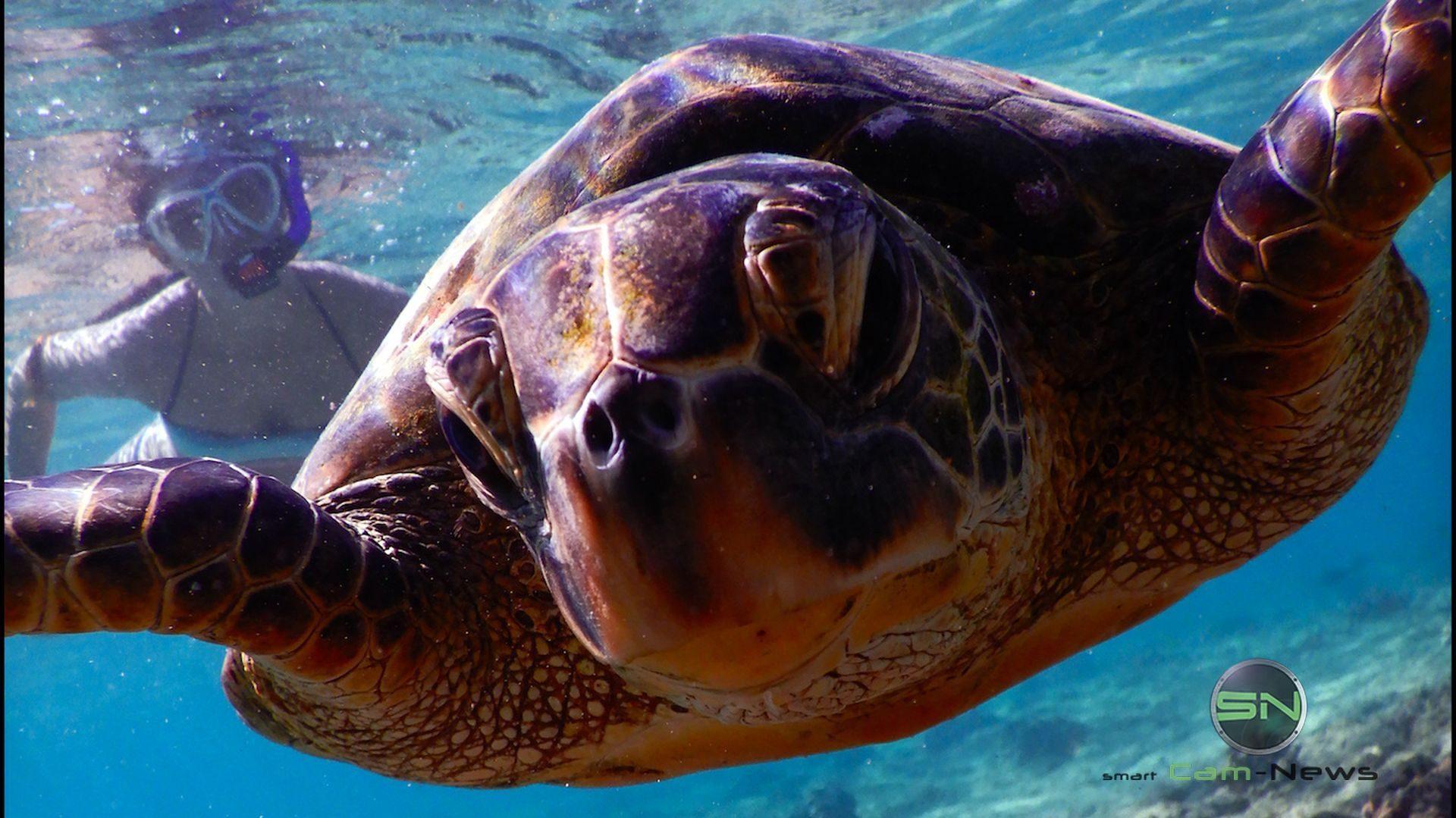 Schildkröte Hawaii - Nikon W300